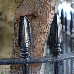 chelsea_tree_fence