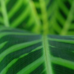 kew_gardens_plants_1